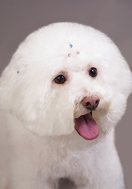 ROYALTY FREE. PETSMART EXCLUSIVE. Pet Expressions shoot at the MDC 11/11 -11/12/14 Bling Video/Photo Releases - Please see David Kless Services Team Contact - Please see Stacy Mendez or Megan Mouser